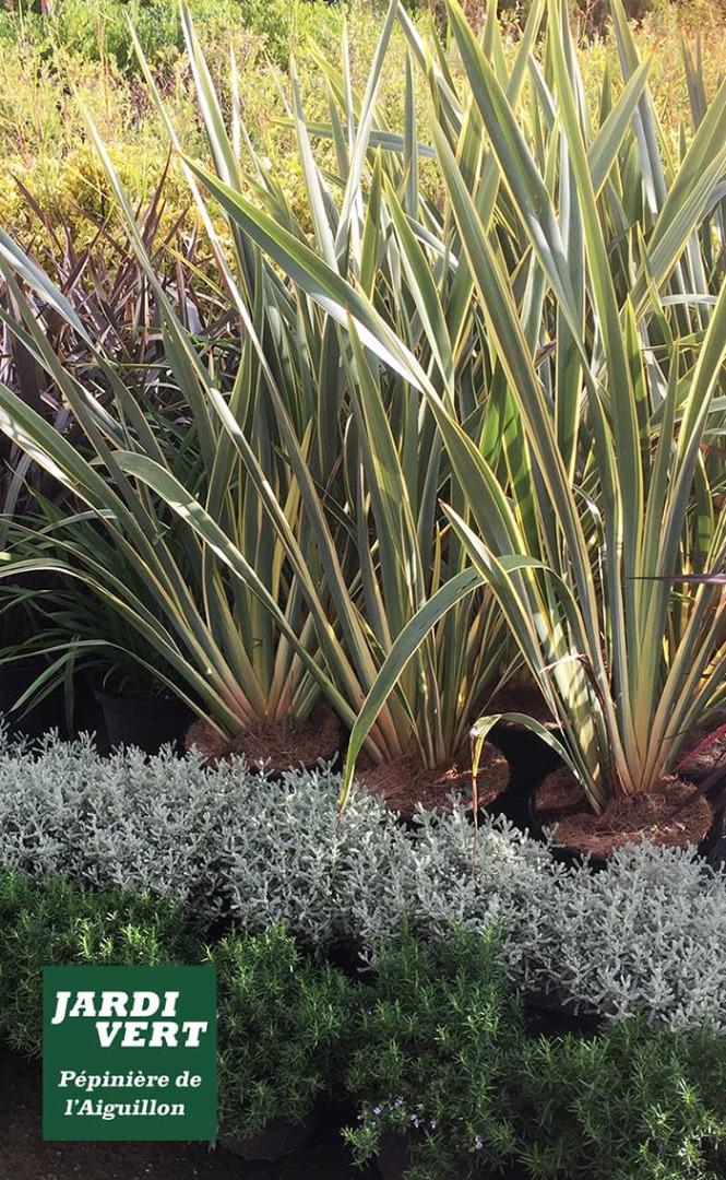 Vos massifs de plantes méditerranéennes - Jardi Vert Pépinière de l'Aiguillon