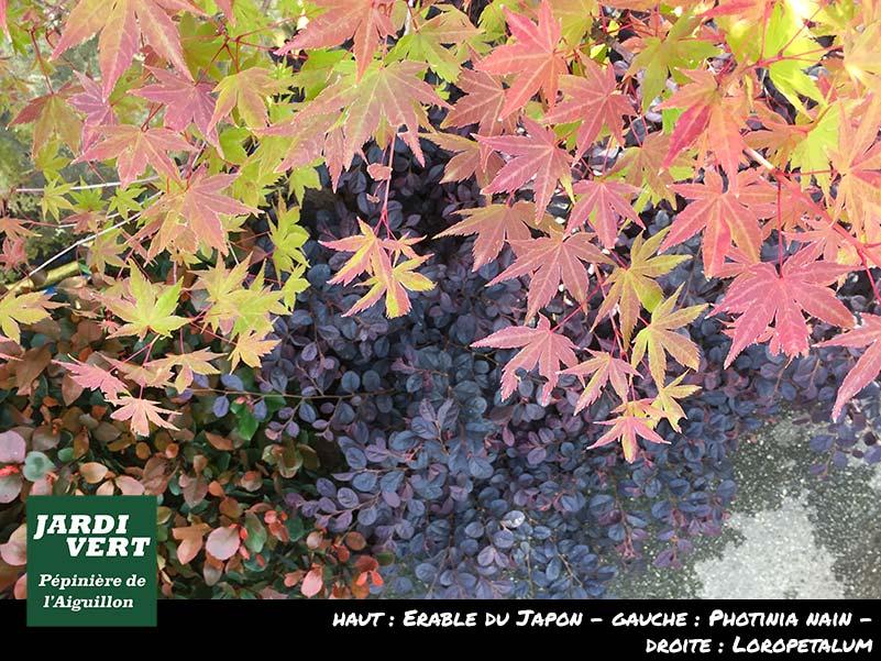Massifs aux couleurs d'automne - Pépinière de L'Aiguillon 31