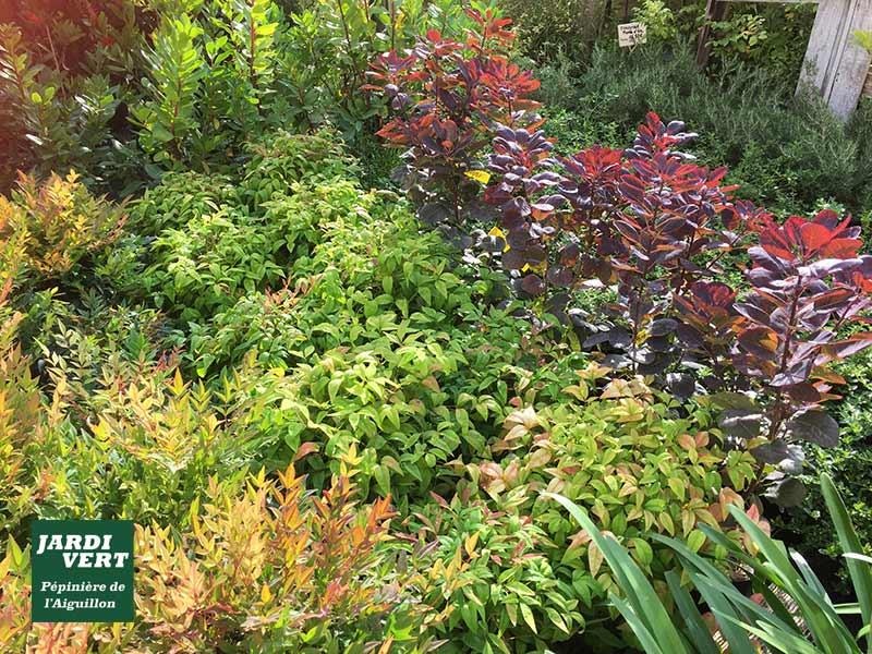 Nandina & cotinus, les stars des massifs colorés d'automne ! - Pépinière de l'Aiguillon 31