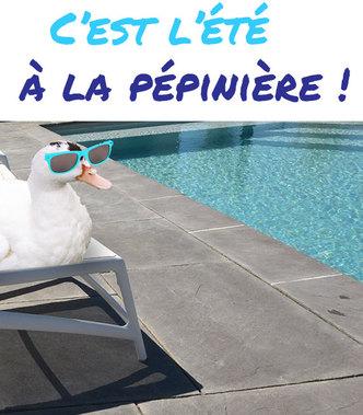 Promos de l'été à la Pépinière de l'Aiguillon à Toulouse