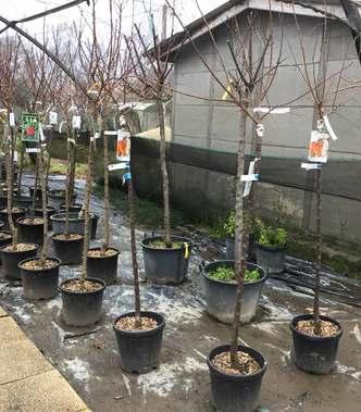 Que planter au mois de mars ?
