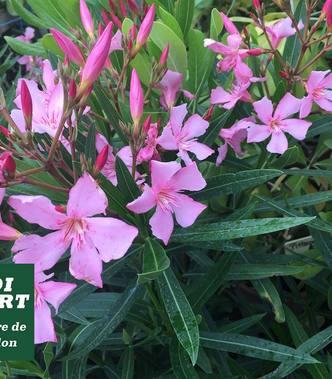 FLOWER POWER ! Les plantes en fleurs au moins de Juin