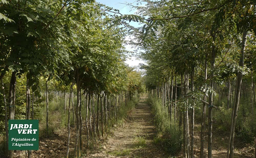 Rafraichir sa maison et son jardin naturellement et durablement