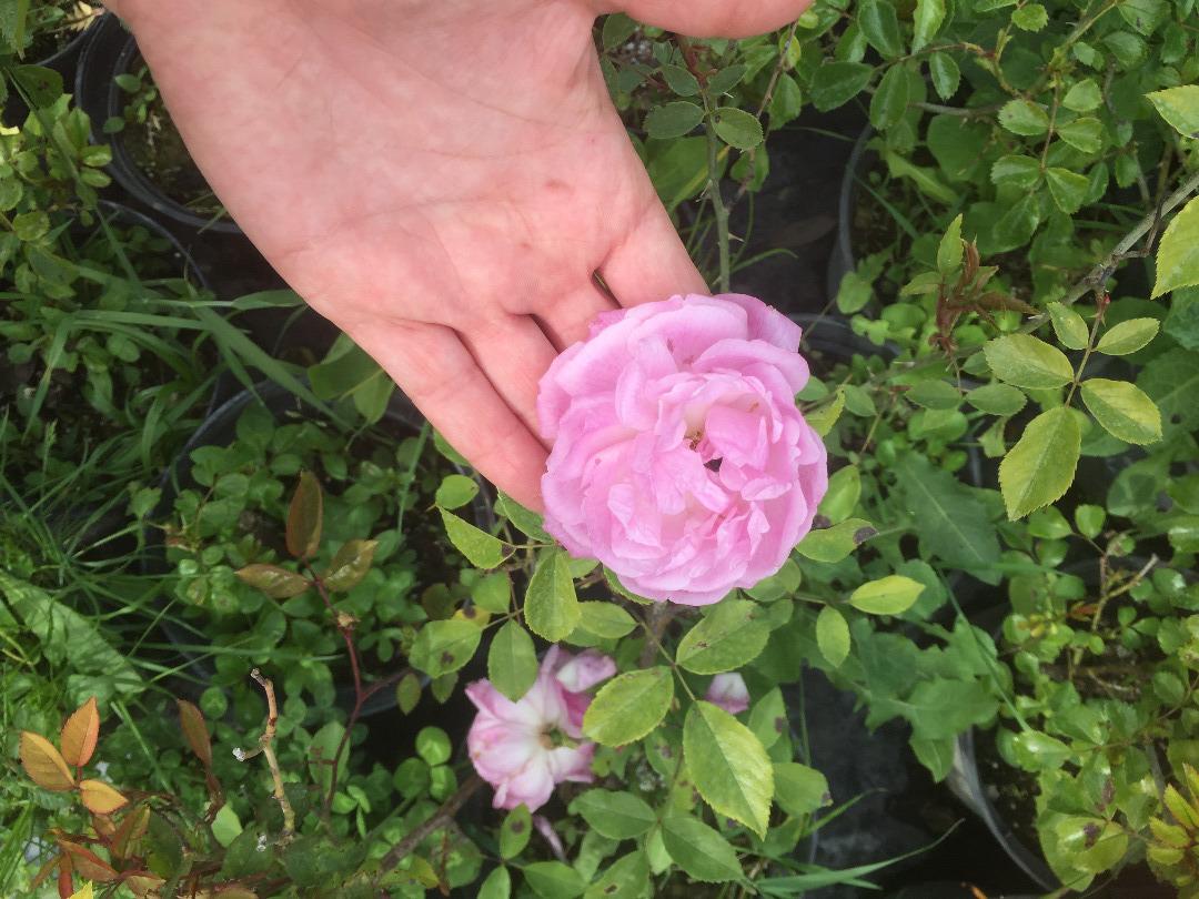 Flower power ! - Les arbustes en fleur en mars et avril