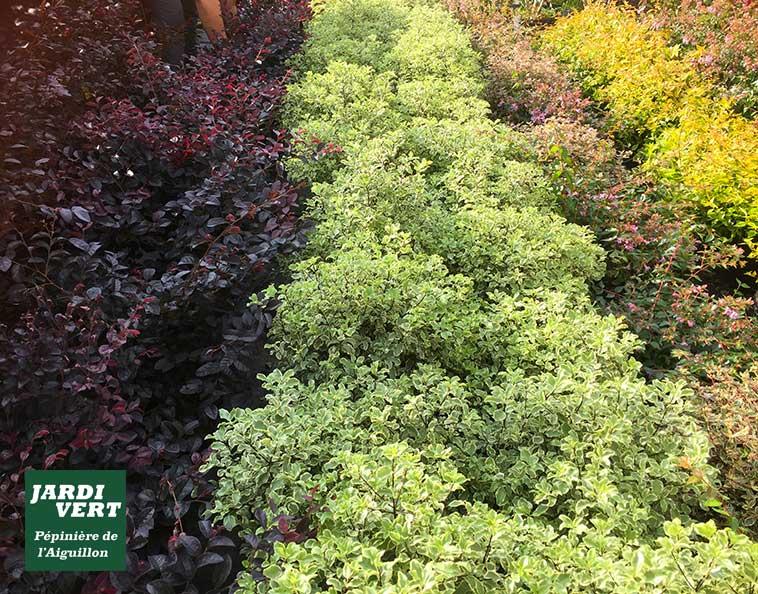 Nouveautés : des arbustes haut en couleur pour l'automne !