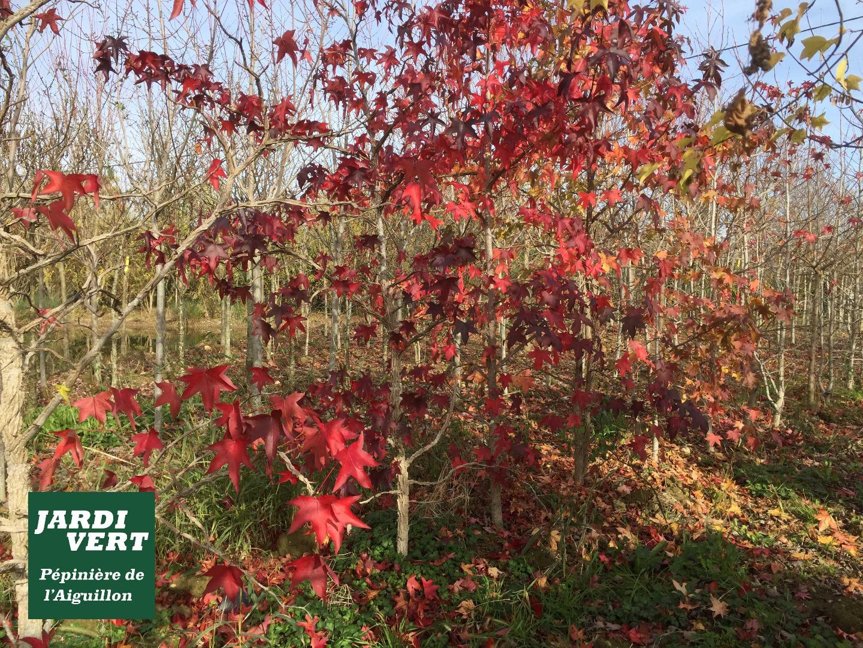 Jardinerie Pas Cher Toulouse jardi vert | pépinière jardinerie à prix malin | toulouse