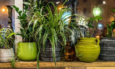 Acheter des arbustes à un bon rapport qualité prix à Toulouse