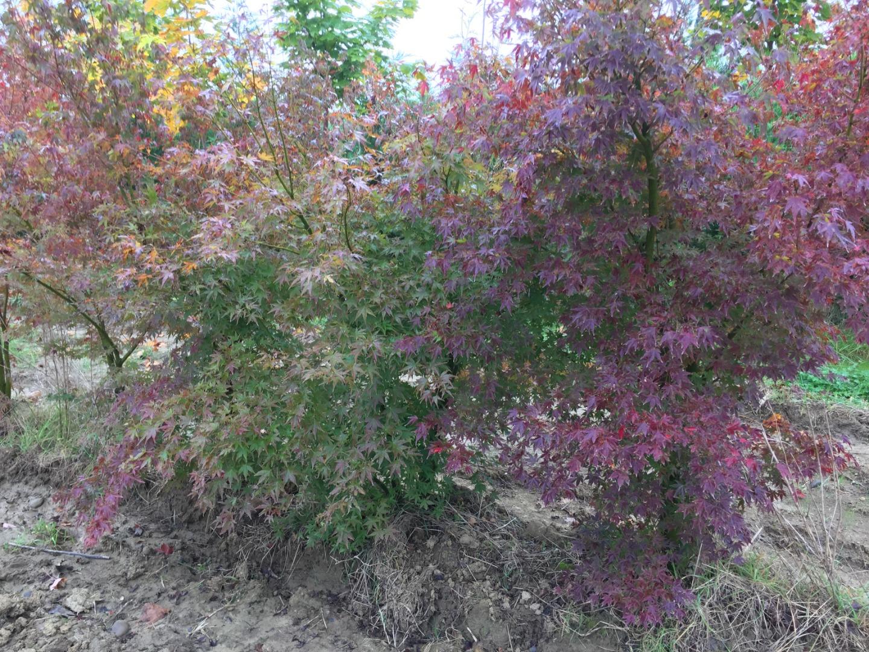 Jardi Vert : vente de plantes grasses à toulouse