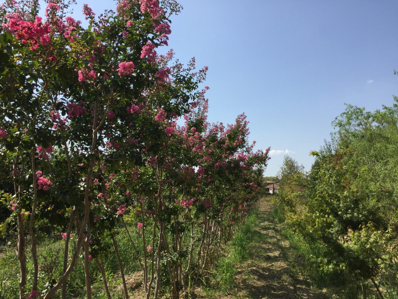 Jardi Vert : jardinerie à toulouse
