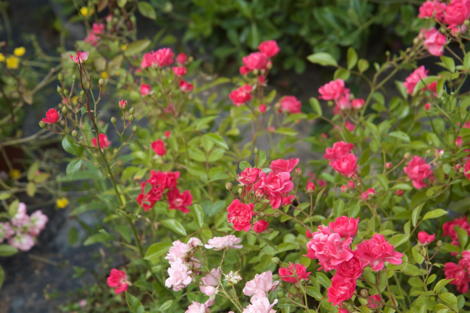 Jardi Vert : vente de plantes à toulouse