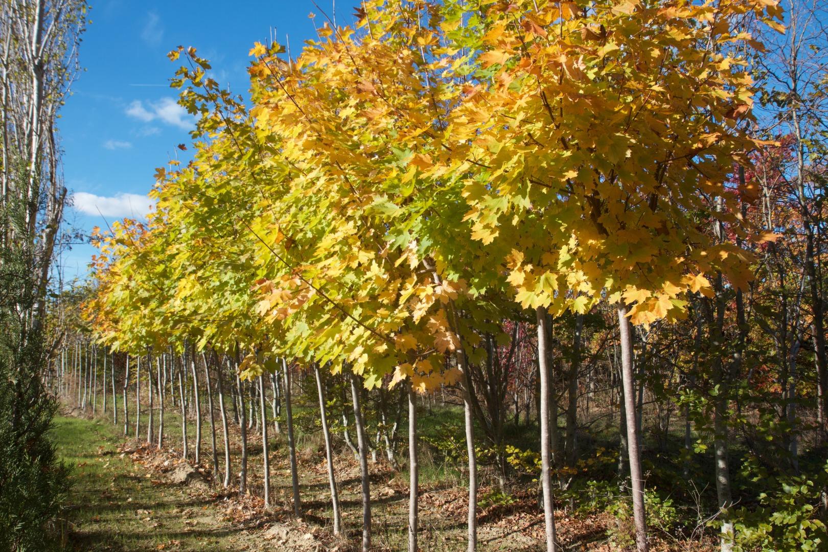 Jardi Vert : vente d'arbustes à toulouse