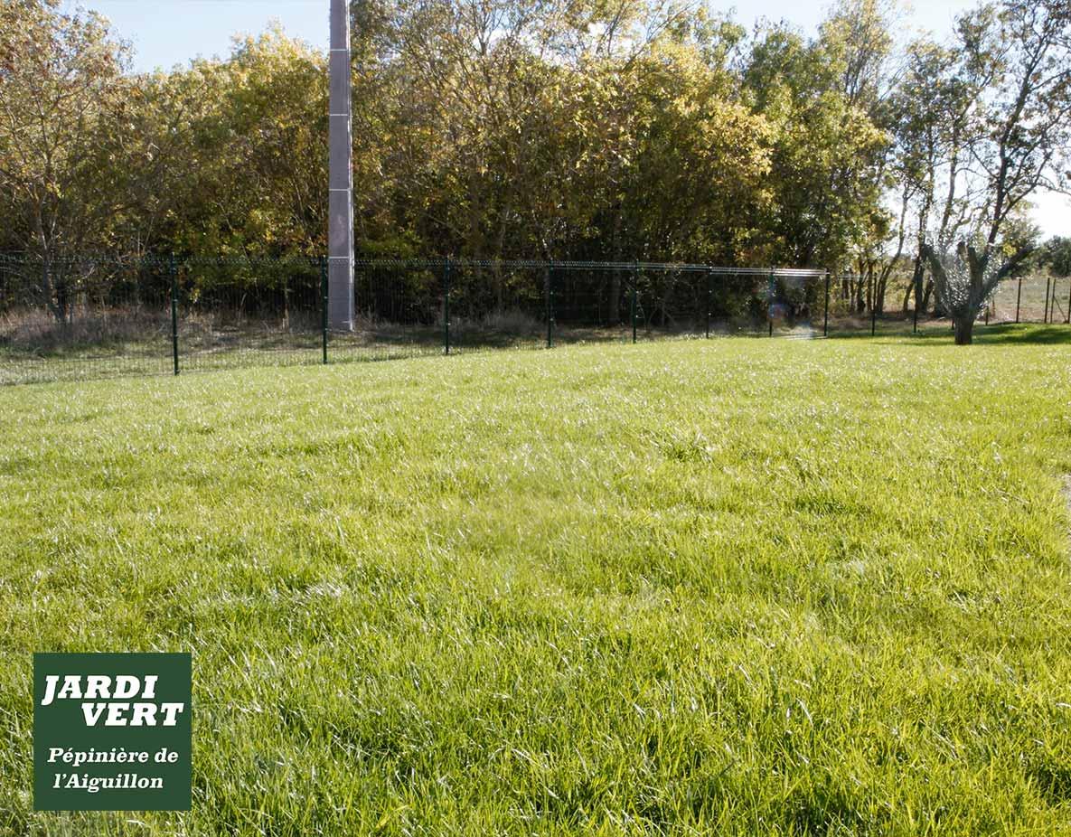 Création d'une pelouse à Fonsorbes