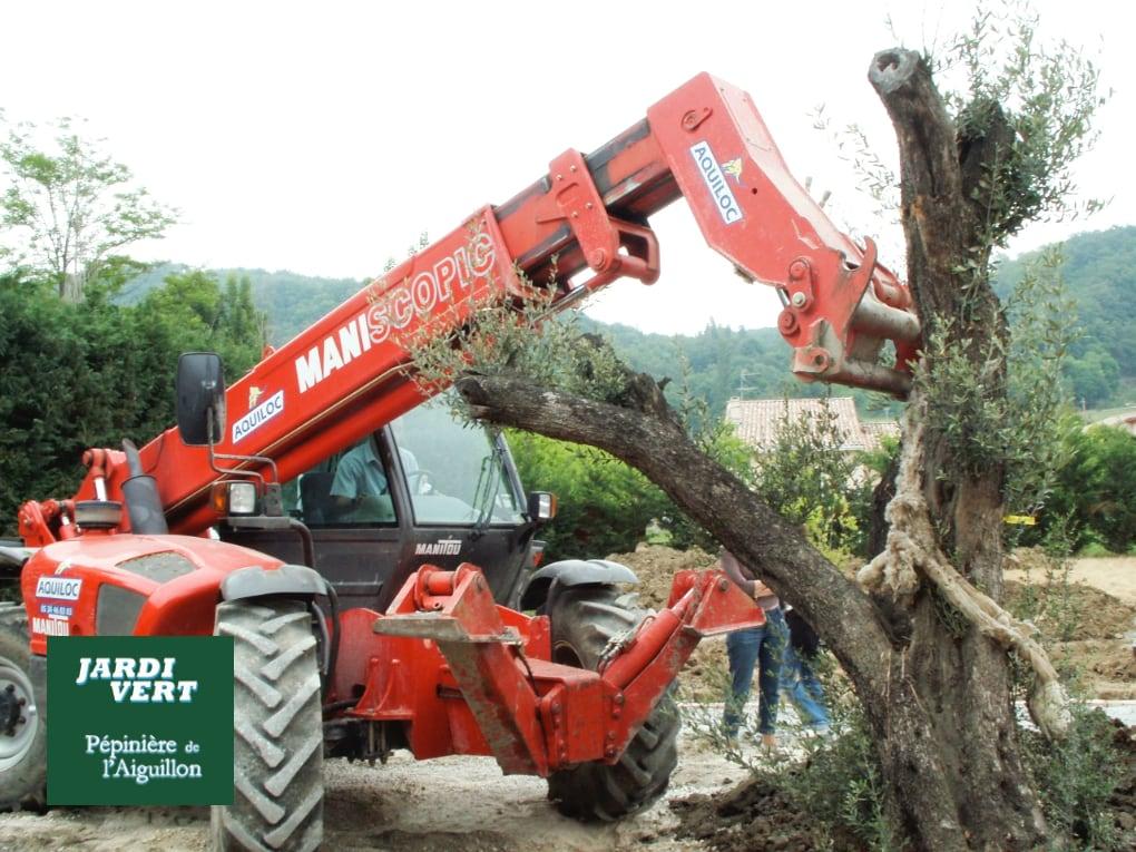 Plantation d'oliviers et d'arbres d'ornements à Toulouse et en Haute-Garonne, Ariège, Gers