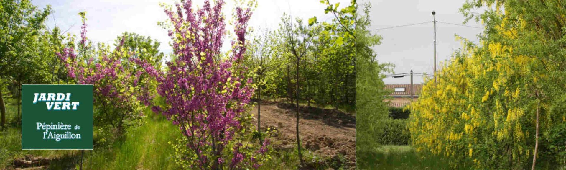 Vente d'arbres fleuris - Pépinière de l'Aiguillon producteur Toulouse