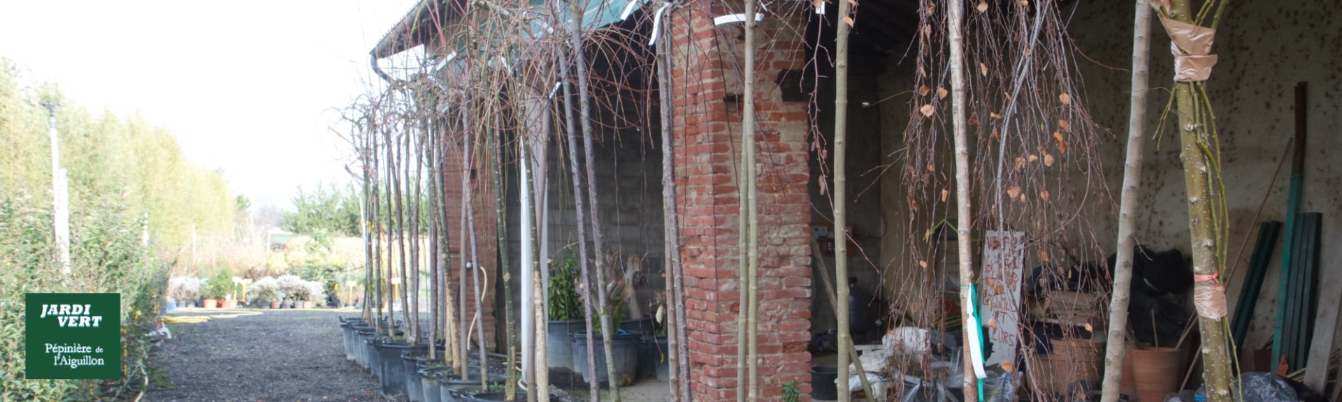 Vente d'arbre décoratifs et d'ornements - Pépinière de l'Aiguillon producteur Toulouse