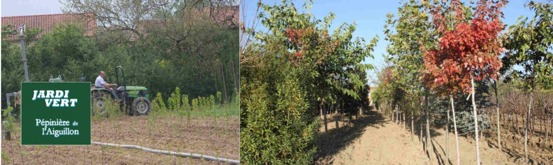 Production de nos arbres à Frouzins, près de Toulouse - Pépinière de l'Aiguillon