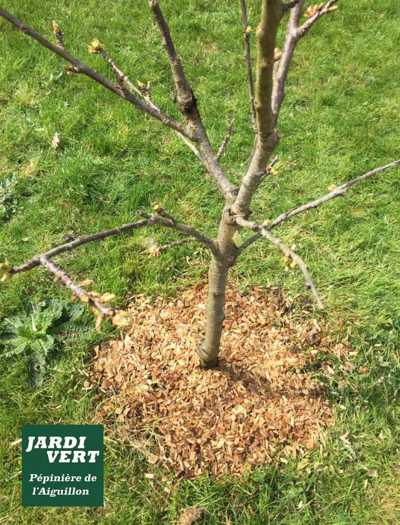 Vente de paillis de bois et pouzzolane pour pailler ses plantations et massifs - protéger contre le froid et la sècheresse - Jardinerie de l'Aiguillon Toulouse