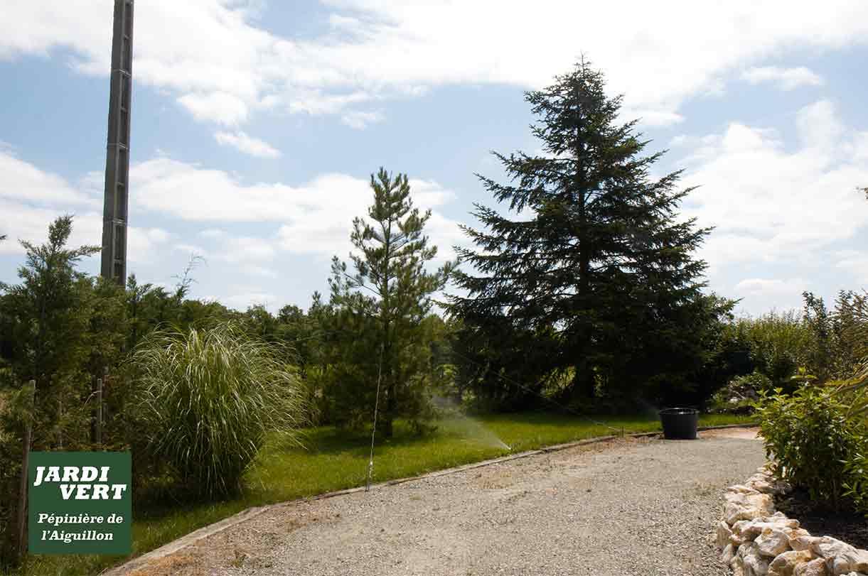 Livraison et plantation de grands conifères en Haute-Garonne, Gers et Ariège