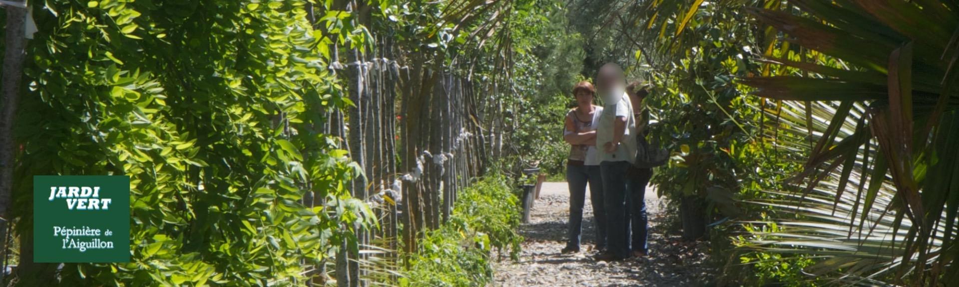 Vente de mimosa - Pépinière de l'Aiguillon producteur Toulouse