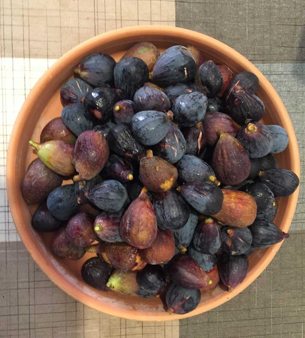 Figues récoltées sur nos figuiers à Frouzins - Pépinière de l'Aiguillon producteur de figuier à Toulouse