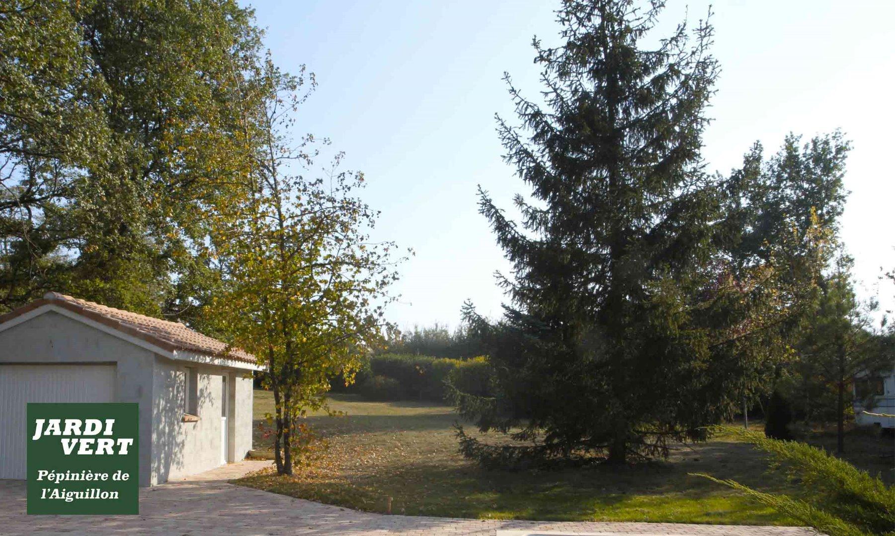 Vente, livraison et plantation de grands conifères et grands arbres contreplantés à Toulouse