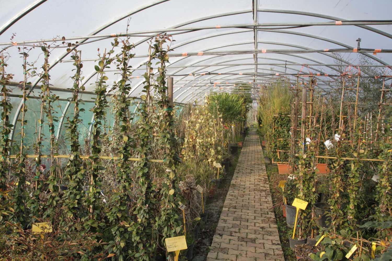 Vente de plantes grimpantes - Pépinière de l'Aiguillon jardinerie à Toulouse