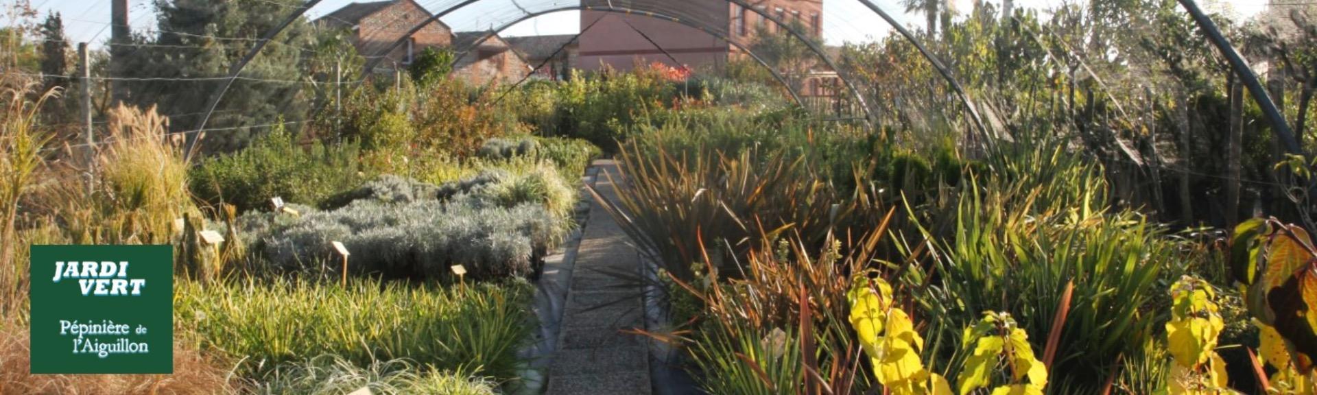 Vente de plantes à massifs - Jardinerie Pépinière de l'Aiguillon Toulouse