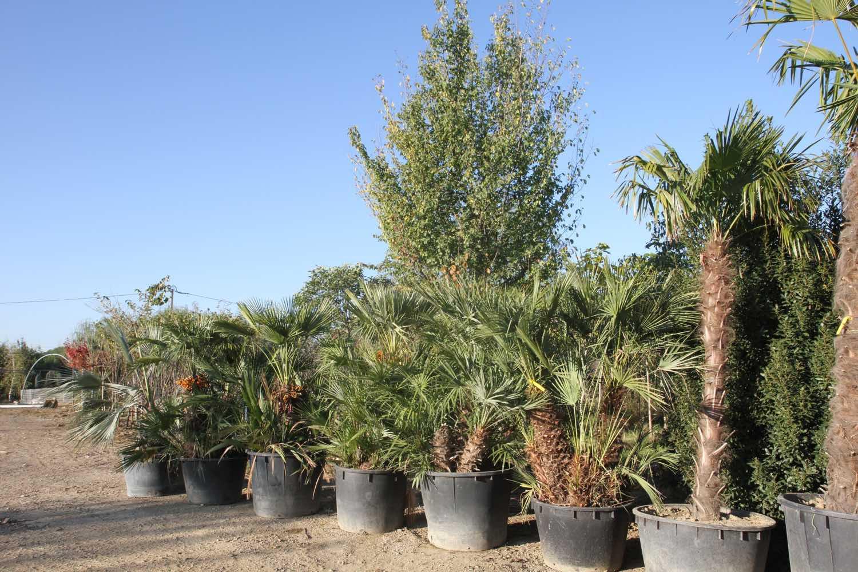 Plantation de palmiers et création de massif sans entretien à Leguevin