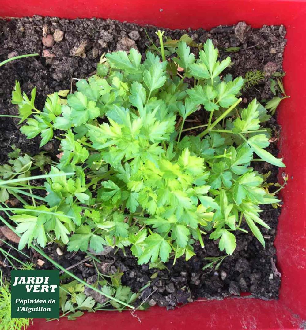 Vente de plantes aromatiques - Jardinerie de l'Aiguillon à Toulouse