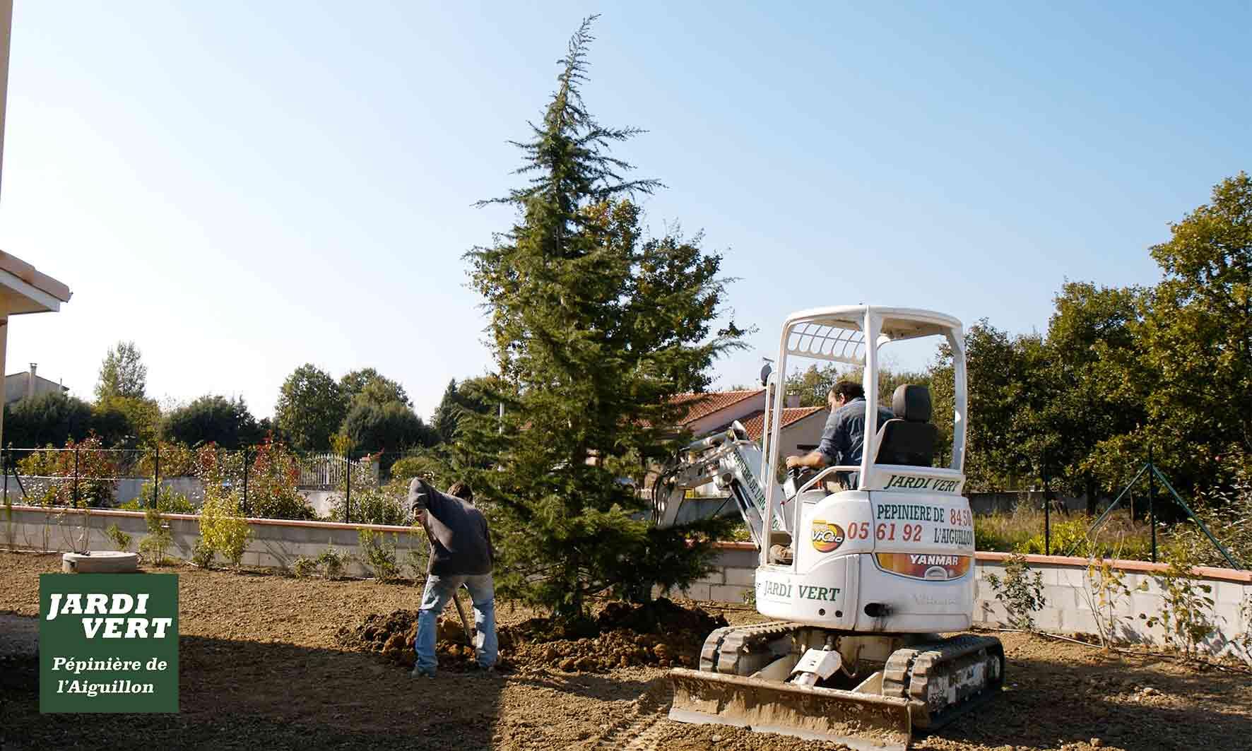 Plantation, tuteurage ou haubanage de vos conifères de grande taille avec garantie de reprise
