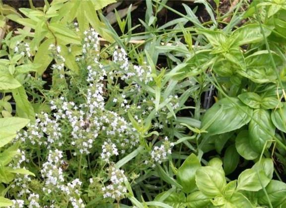 Vente de lavandes, romarins et plantes aromatiques - Jardinerie de l'Aiguillon à Toulouse