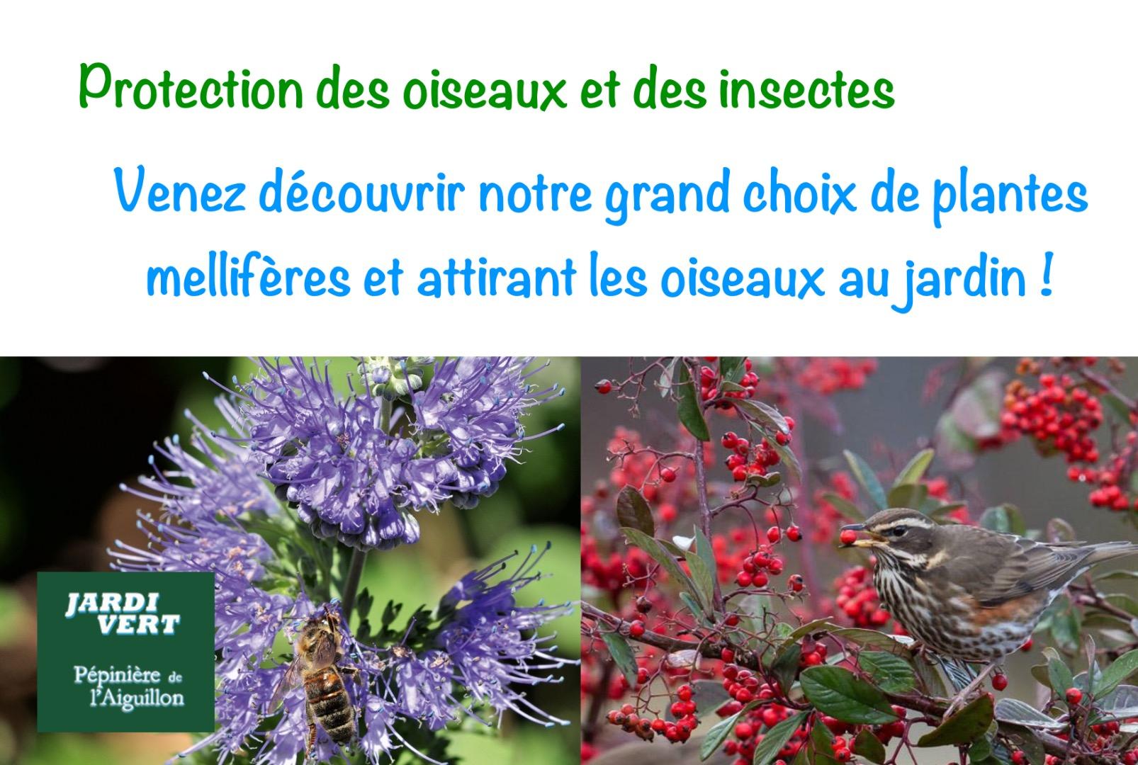 Production et vente de laurières - prunus cerasifera- - Pépinière de l'Aiguillon jardinerie à Toulouse