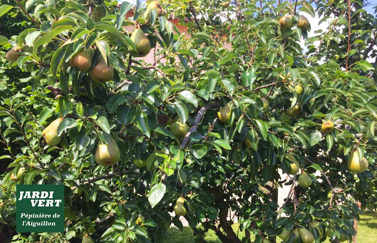 Vente d'arbres à fruitiers : poirier et pommier, Pépinière de l'Aiguillon arboriculteur 31