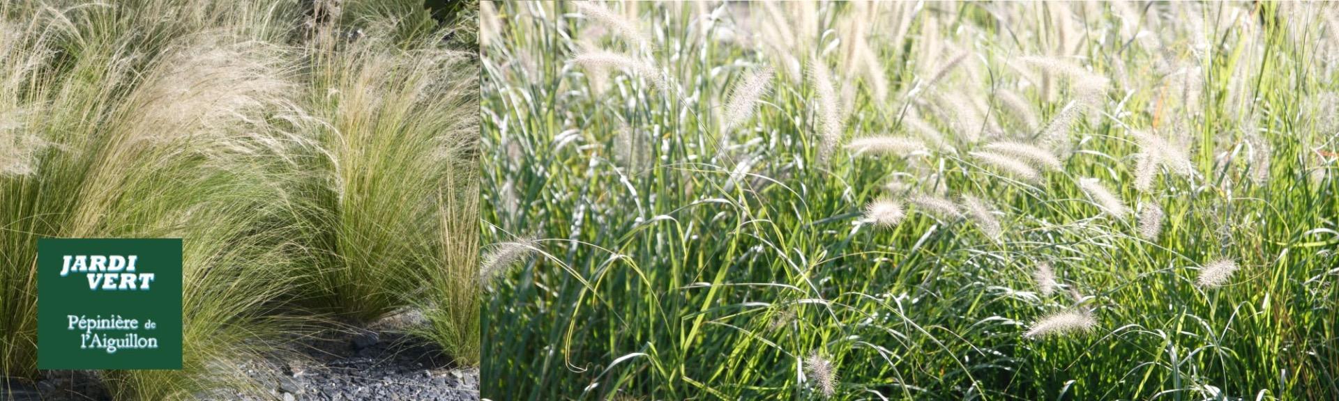 Vente de plantes graminées - Jardinerie Pépinière de l'Aiguillon Toulouse
