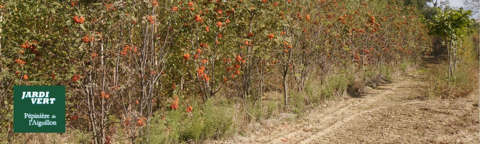 Conseil pour vos plantations  - Pépinière de l'Aiguillon paysagiste Toulouse