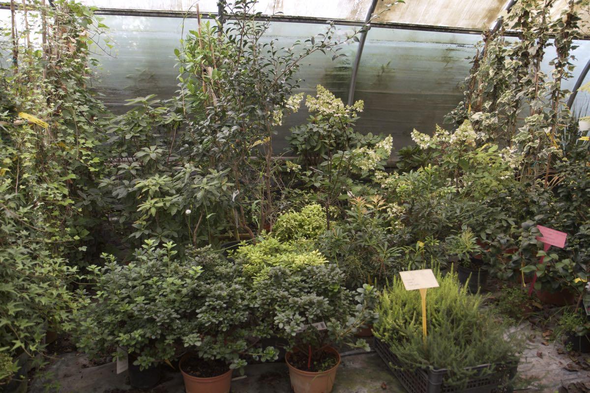Grand choix de plantes de terre de bruyères - Pépinière de l'Aiguillon jardinerie à Toulouse