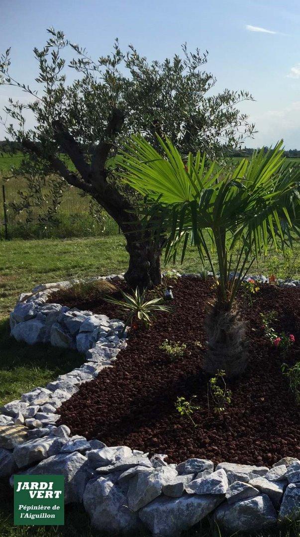 Création d'un massifs de plantes en pouzzolane avec un olivier à Toulouse